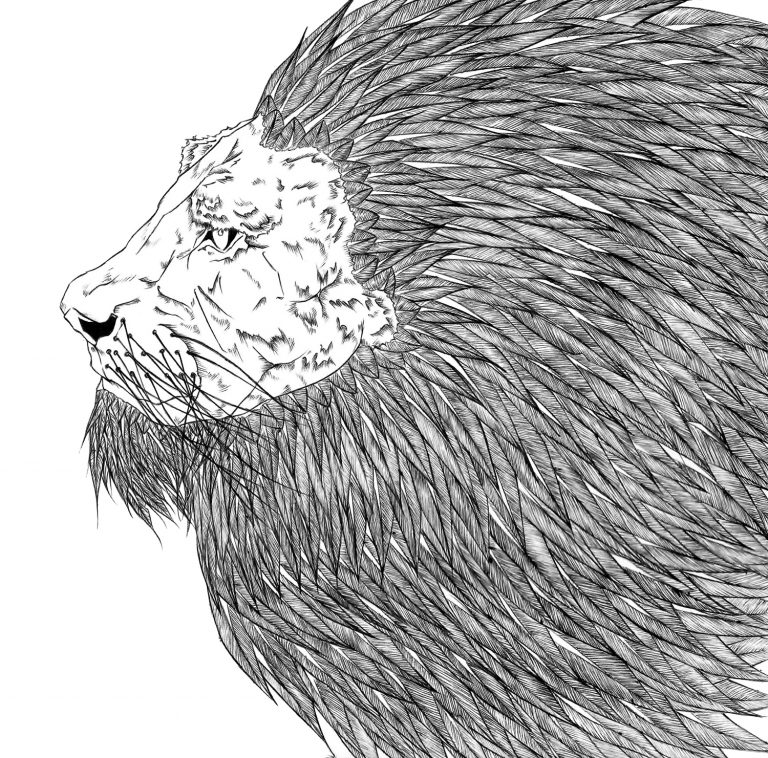Detailed illustration of a lion's face and mane.